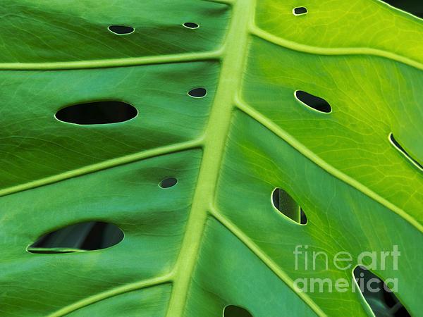 Peekaboo Leaf Print by Ann Horn