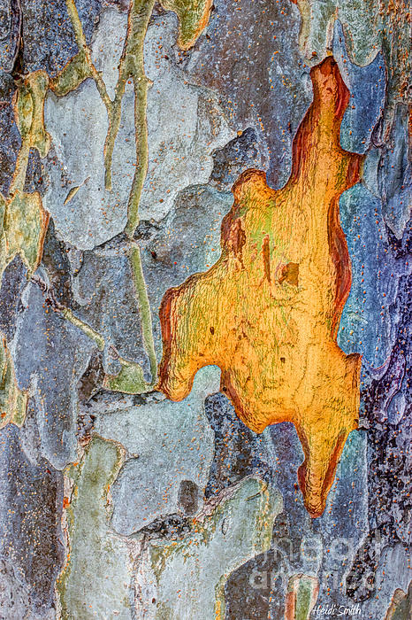 Heidi Smith - Peeling Bark Elm Abstract
