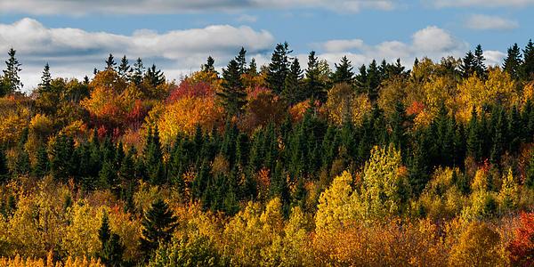 Pei Autumn Trees Print by Matt Dobson