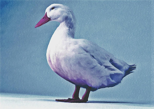 Pekin Ducks 2 Print by Lanjee Chee