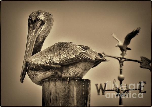 Pamela Blizzard - Pelican and the Weathervane