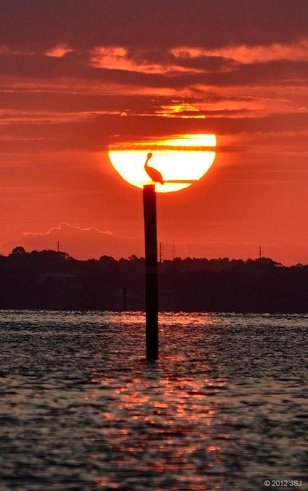 Pelican Silhouette Sunrise On Sound Print by Jeff at JSJ Photography