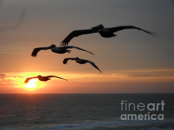 Pelican Sun Up Print by Laurie D Lundquist