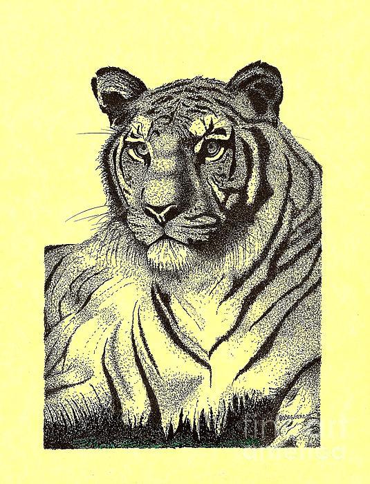Pen And Ink Drawing Of Royal Tiger Print by Mario  Perez