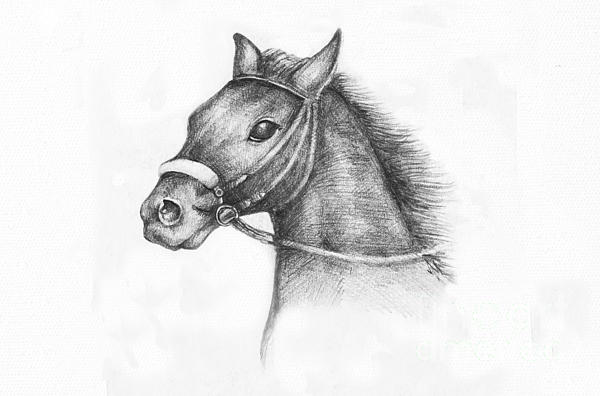 Pencil Drawing Of A Horse Print by Kiril Stanchev