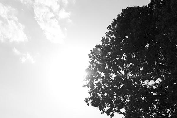 Perfect Tree Perfect Sunset Print by Shaun Maclellan
