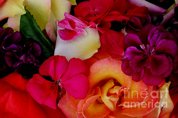 Petal River Print by Jeanette French