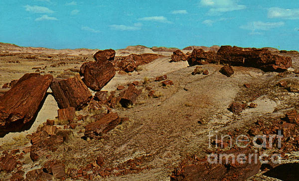 Petrified Forest National Park Print by Ruth  Housley