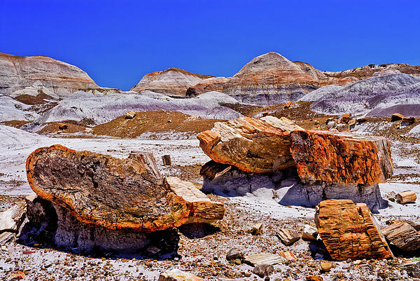 Nadine and Bob Johnston - Petrified Forest - Painted Desert