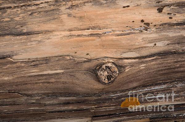 Petrified Wood Detail Print by Vivian Christopher