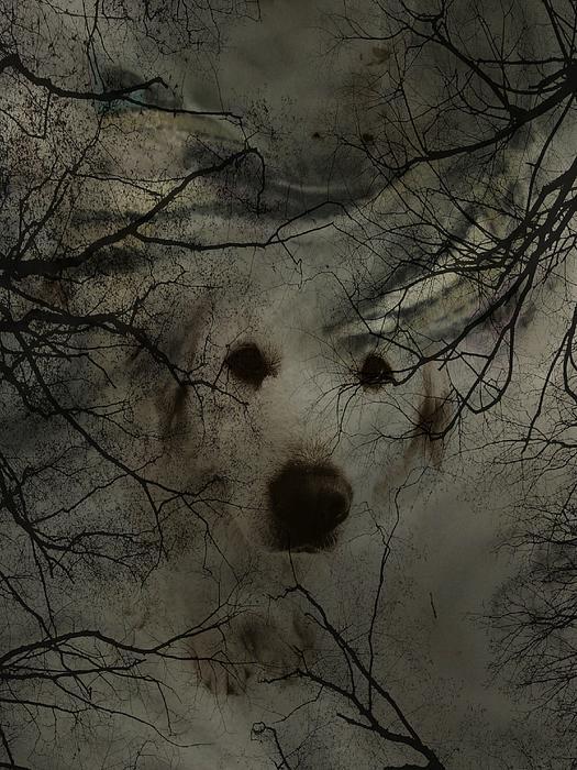 Phantom Dog Print by Shirley Sirois
