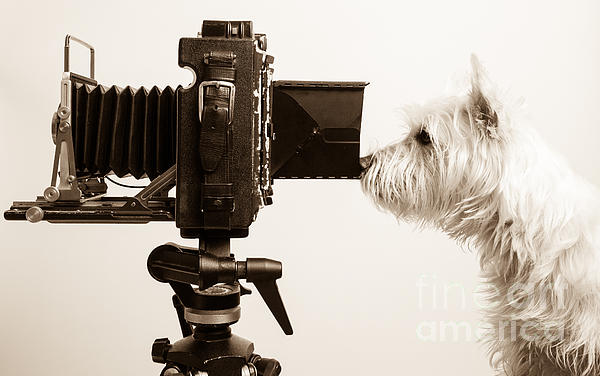 Pho Dog Grapher Print by Edward Fielding