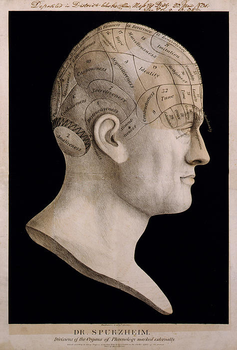 Phrenology Print by Nomad Art And  Design