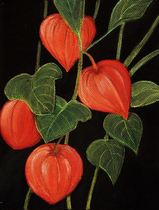 Physalis Print by Anastasiya Malakhova