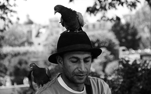 Dylan Stinson - Pigeon man