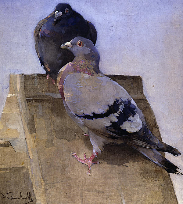Pigeons On The Roof Print by Joseph Crawhall