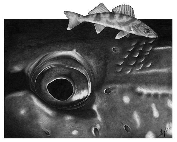 Pike Eye Print by Nick Laferriere