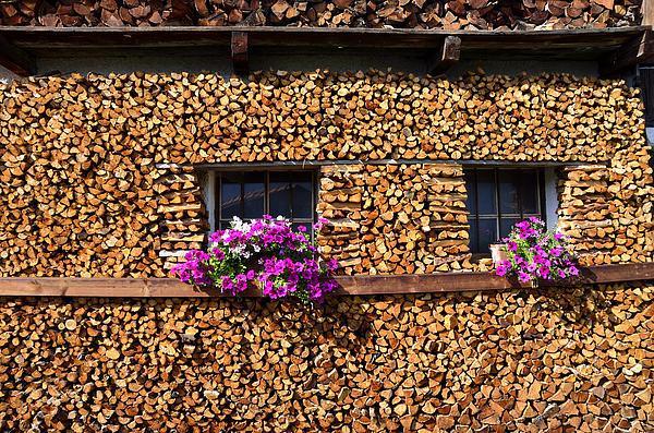Pile Of Firewood Print by Elzbieta Fazel