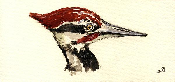 Pileated Woodpecker Head Study Print by Juan  Bosco