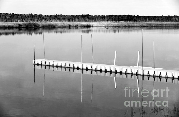 Pine Barrens Dock Print by John Rizzuto