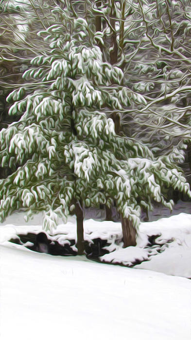 Pine Tree Covered With Snow 2 Print by Lanjee Chee