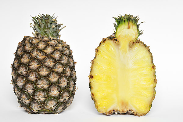 Pineapple Ananas Comosus Print by Matthias Hauser