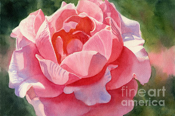 Pink And Orange Rose Blossom Print by Sharon Freeman