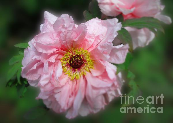 Arlene Carmel - Pink Corsage