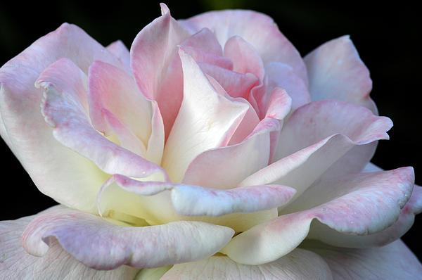 Wanda Brandon - Pink Cotton Candy