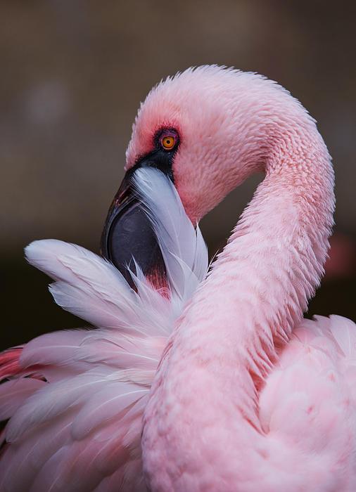 Angie Vogel - Pink Flamingo