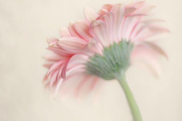 Pink Flower Photography - Pink Nursery Wall Art - Baby Girl Nursery Art - Pale Pink Mint Green Decor Print by Amy Tyler