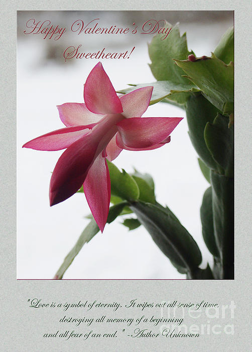 Pink Flower Valentine #1 Print by Andrew Govan Dantzler