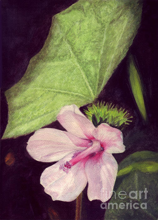 Pink Hibiscus Print by Mukta Gupta