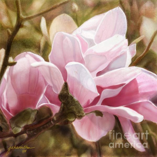 Pink Magnolia One Print by Joan A Hamilton