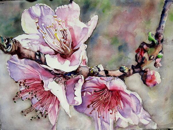 Pink Magnolias Print by June Conte Pryor