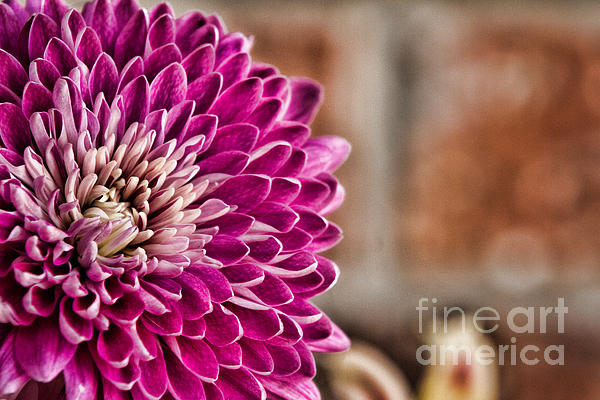 Pink Mum Print by Lana Trussell