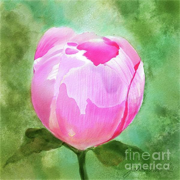 Pink Peony Bud Print by Joan A Hamilton