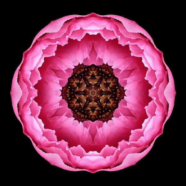 Pink Peony Flower Mandala Print by David J Bookbinder