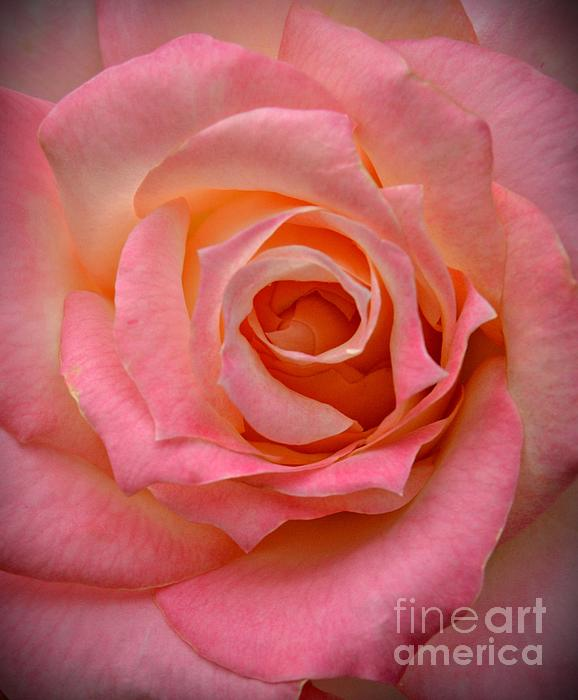 Chalet Roome-Rigdon - Pink Rose Macro