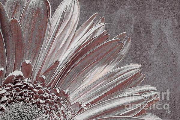 Pink Silver Print by Lois Bryan