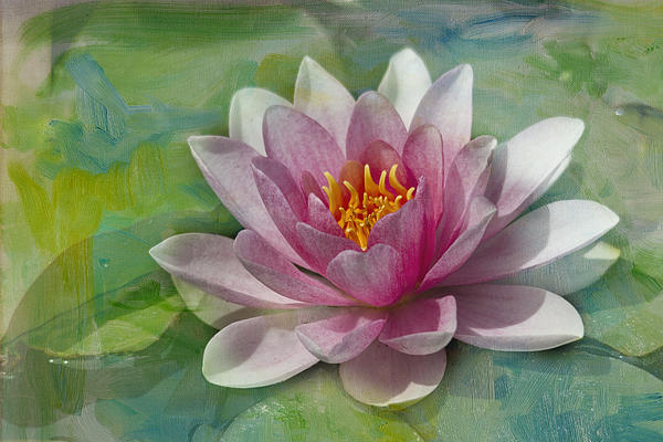 Pink Water Lily Print by Rebecca Cozart