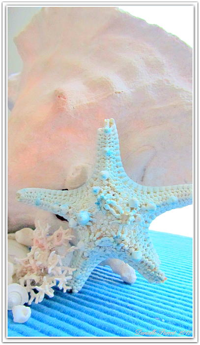 Pink White And Blue Conch And Sea Shells Print by Danielle  Parent