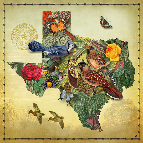 Plant Map Of Texas Print by Gary Grayson