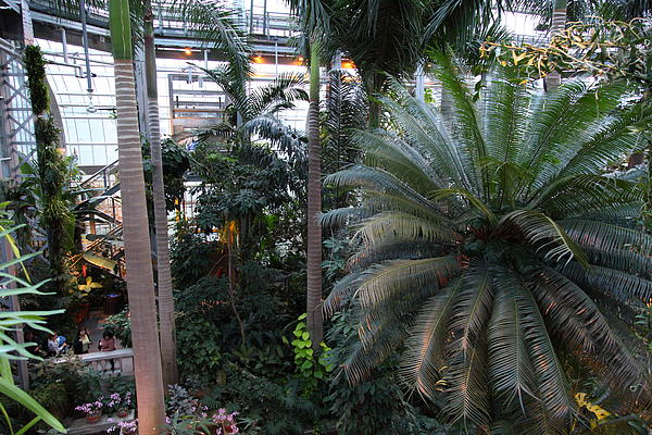 Plants - Us Botanic Garden - 011311 Print by DC Photographer