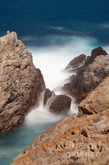 Point Lobos Number Two Print by Catherine Lau