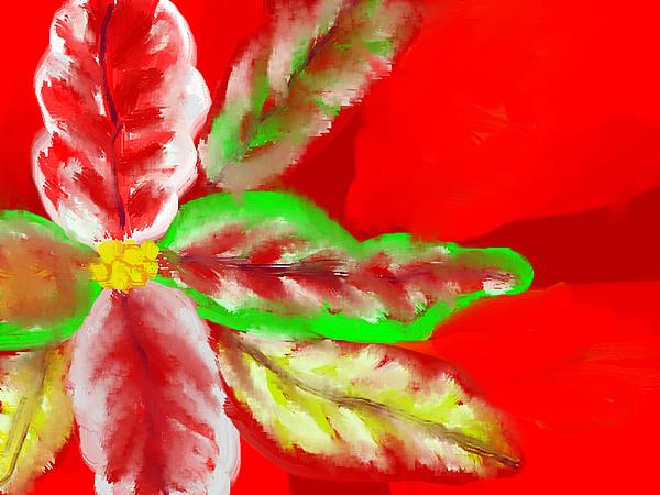 Pointsettia Print by Doris Culverhouse