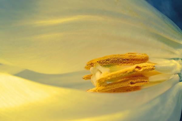 Pollen In Subtle Colors Print by Beth Akerman