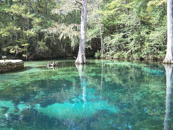 Ponce De Leon Springs Print by Michele Kaiser