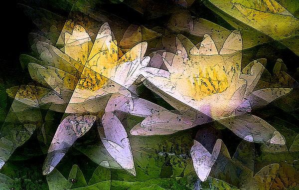 Pond Lily 24 Print by Pamela Cooper