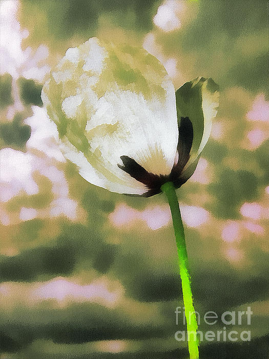 Poppy Flower In The Sky  Print by Odon Czintos